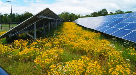 How Land Under Solar Panels Can Contribute To Food Security Solar Panels Solar Solar Farm