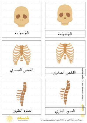 الهيكل العظمي درس ثلاثي المراحل 3 Gingerbread Cookies Gingerbread Art