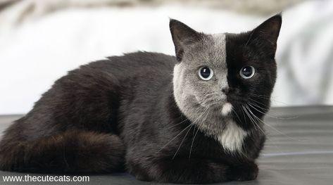 5 Cute cats dry skin problem's treatments