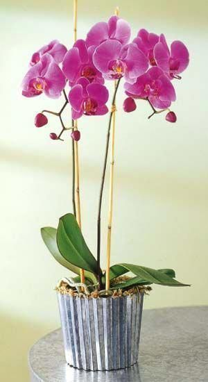 Orchids For Sale Tesco Orchids Orchids Orchid Care Beautiful Orchids