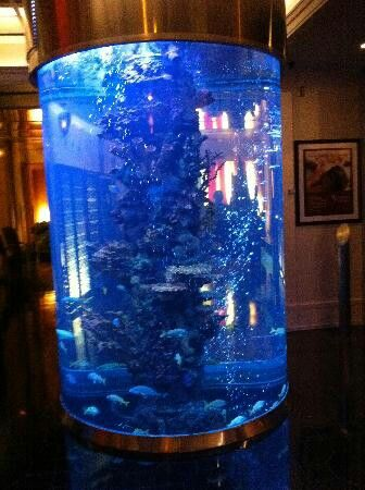 Fish Tank Pillar I D Put On Either Side Of My Bar Pinterest Tanks And