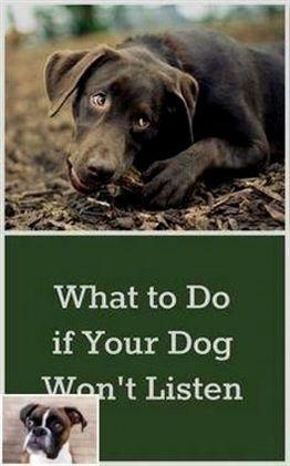 Dog Training Electronic Collar Dog Training Visalia Dog
