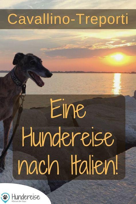 Urlaub Hund Italien Bungalow Strand Hundefreundlich Hundereise Urlaub Mit Hund Hund Reisen Hunde