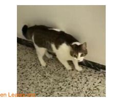 Pin En Gatos Perdidos