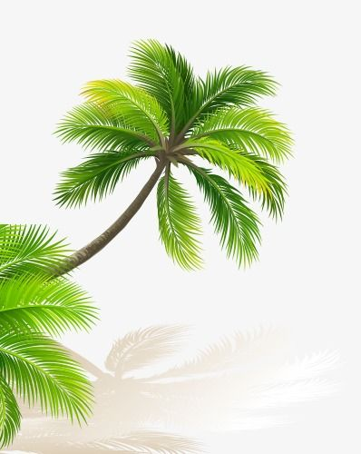 Green Coconut Trees In 2020 Tree Wallpaper Tree Leaves Large