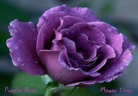 Toko Bunga Cinta 081905954242 082112016287 Toko Bunga Jakarta Karangan Bunga Terbaik Bunga Toko Bunga Warna