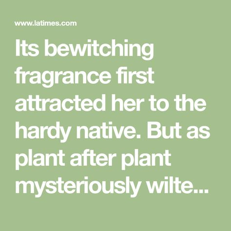 Its bewitching fragrance first attracted her to the hardy native. But as plant after plant mysteriously wilted under her care, keeping it alive became her obsession.