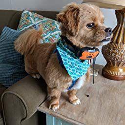 Amazon Com Customer Reviews Dogrook Dog Bark Collar Humane Anti