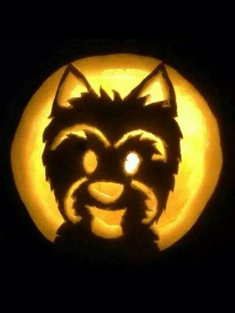yorkie pumpkin template  Yorkie jack-o-lantern! :-) in 6 | Cute pumpkin carving ...