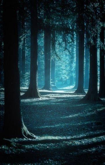 Landscape Night Forest 32 Ideas Landscape Skog Bilder Bakgrund