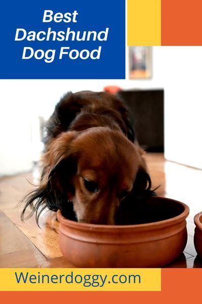 What Is The Best Dachshund Dog Food Top Dog Foods Dog Food Recipes Dog Food Reviews