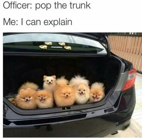 The best dog memes of 2019 by Small Animals. Enjoy the funny dogs meme. Funny Animal Jokes, Funny Dog Memes, Cute Funny Animals, Cat Memes, Funny Cute, Funny Dogs, Funny Captions, Top Funny, Super Funny