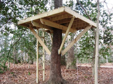 How To Build A Treehouse Step By Step Abouthouse Pallet Tree Houses Simple Tree House Tree House Kids