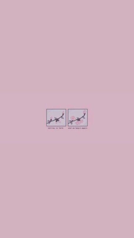 Aesthetic Wallpaper Tumblr Iphone Background Pink Soft Wallpaper Pink Wallpaper Quotes
