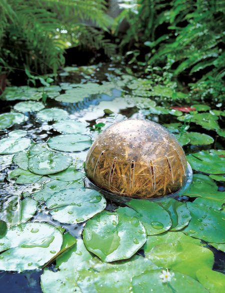 Barley Straw Bales Natural Pond Cleaner Gardeners Com Pflanzen Garten
