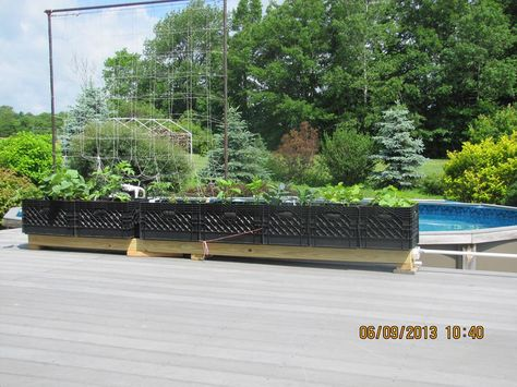 Milk crate planters on rain gutter irrigation system.
