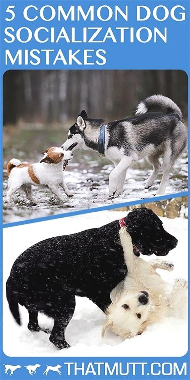 Pin On Dog Training With Electronic Collar