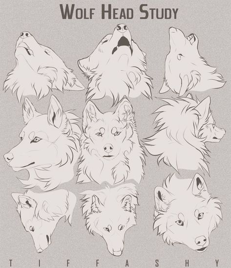 Drawing Animals Wolf Head Study/Tutorial by TIFFASHY - Welcome to Drawing Den, an online collection of the most helpful art resources and tutorials! Animal Sketches, Animal Drawings, Drawing Sketches, Drawing Animals, Wolf Drawings, Drawing Tips, Manga Drawing, Sketching, Art Reference Poses