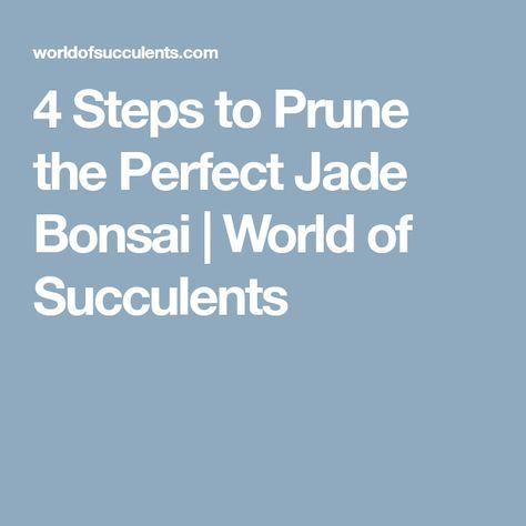 4 Steps To Prune The Perfect Jade Bonsai World Of Succulents Jade Bonsai Bonsai Prune