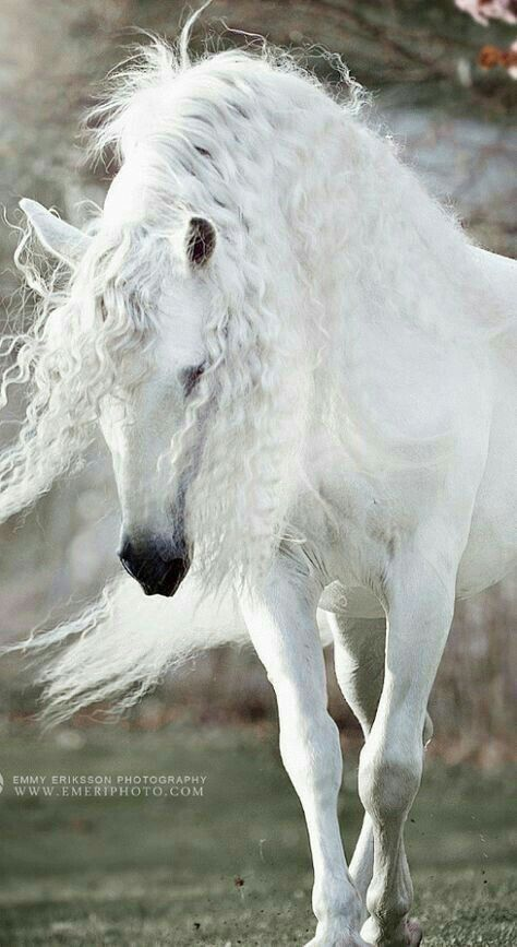 Fulfill the Fashion Forever - Goktan - Pferdefotografie - Horse Cute Horses, Pretty Horses, Horse Love, Andalusian Horse, Friesian Horse, Arabian Horses, Majestic Horse, Majestic Animals, Animals And Pets