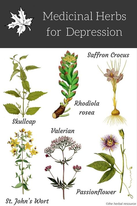 Home Remedies Which of these herbs are you using for anxiety and how do you ensure that you're getting the right dose? - Using herbal remedies and medicinal herbs for depression are often sought by people who have. Holistic Remedies, Natural Health Remedies, Natural Cures, Natural Healing, Natural Anxiety Remedies, Natural Beauty, Healing Herbs, Medicinal Plants, Herbal Plants