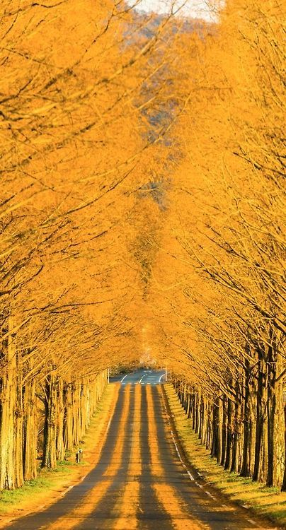 Through the golden road - Japan
