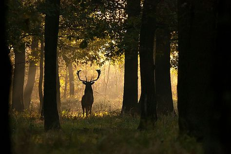 The Lord of the Forest by Jajca, via Flickr