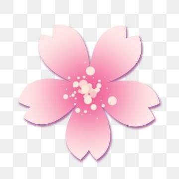 Sakura Flowers Commercial Elements Cherry Blossoms Flower Plant Png Transparent Image And Clipart For Free Download Sakura Flower Cherry Blossom Vector Flower Drawing