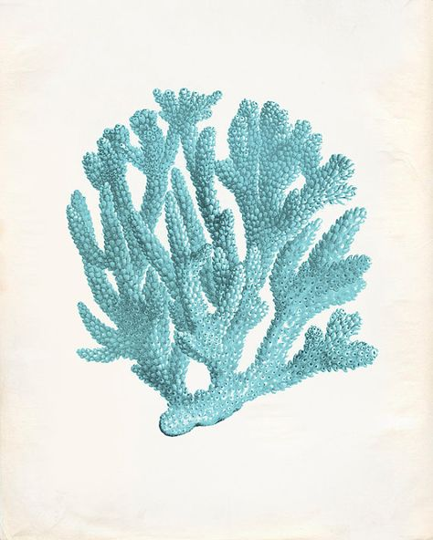 Vintage Ocean Teal Kelp Seaweed Coral Print 8x10 P228 on Etsy, $14.00