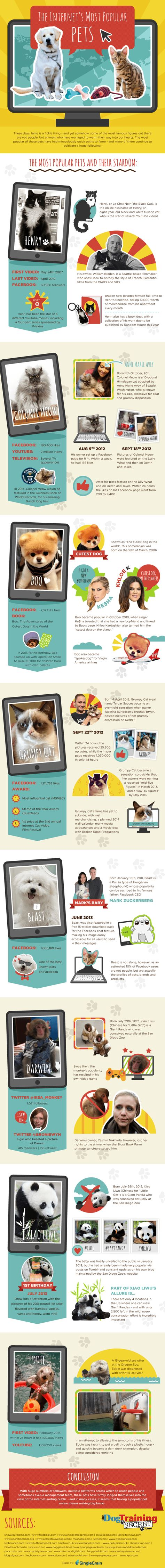 The Internet's Most Popular Pets
