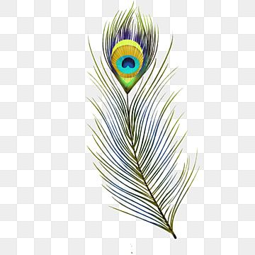 Pero Pavlina Pticy Po Moemu Telu Puh Pero Png I Psd Fajl Png Dlya Besplatnoj Zagruzki In 2021 Feather Quill Feather Background Feather Vector