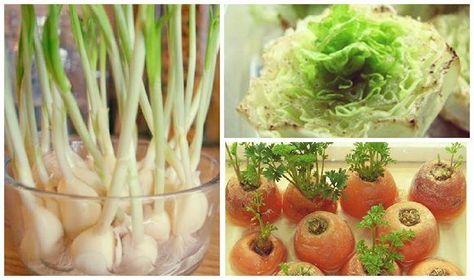 Top 10 Gemüse, die nachwachsen