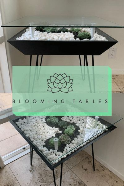 Give Your Home A Luxury Style Plant Decor Indoor Plant Decor Indoor Plants