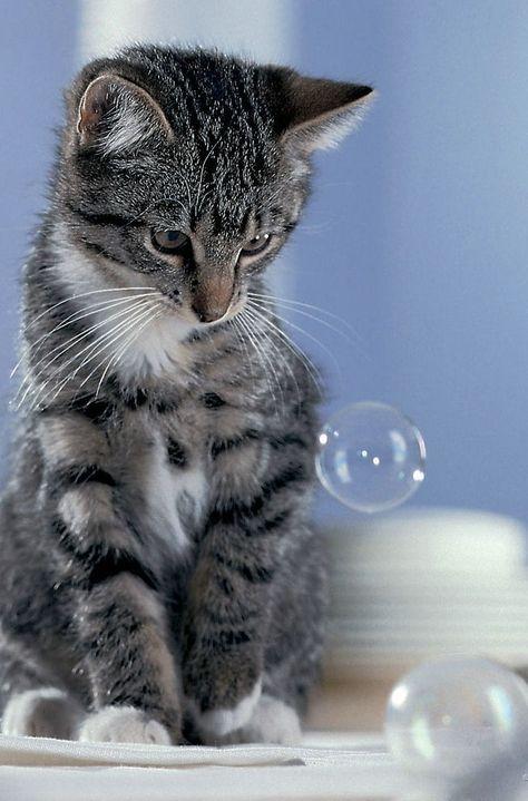 what`s the point? I can`t eat it and if I paw it=it goes away!