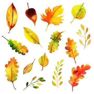 ألوان مائية رسم خلفية ورق الجدران نبذة مختصرة الخريف بطاقة زاهى الألوان اللون متعدد الألوان ديكور زخر Watercolor Autumn Leaves Autumn Leaves Maple Leaf Drawing