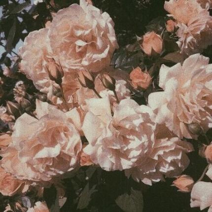 61 Trendy Flowers Aesthetic Wallpaper Pink Flower Aesthetic Plant Aesthetic Aesthetic Wallpapers