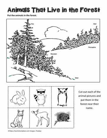 Habitat Worksheets For 1st Grade Animal Habitat Worksheets Animal Habitats Habitat Worksheets Animal Worksheets Habitat worksheets for 1st grade