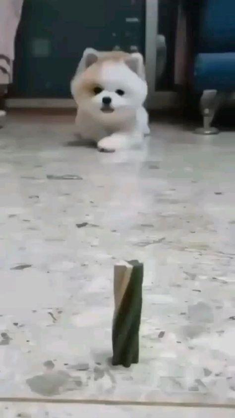 Good dog! �😄