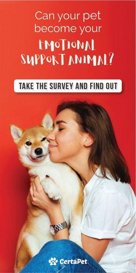 Dog Training Institute Training Course Remote Dog Training Shock