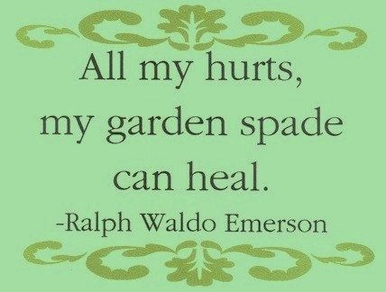 gardening quotes to brighten your day gardens weddings and