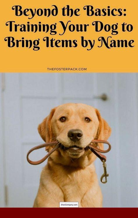 Pin On Dog Dog Doggy Dog