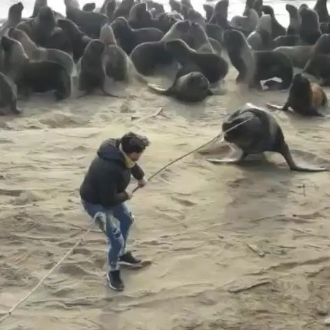 After many attempts, this legend successfully removed a tire from this sea lions head! Big thank you 🤗💙 Video by ➖ Credit?