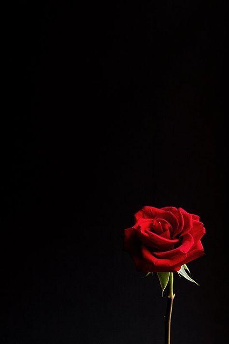 Peter Dahryanoo On Twitter Red Roses Wallpaper Rose Wallpaper Flower Wallpaper Dark red rose aesthetic wallpaper