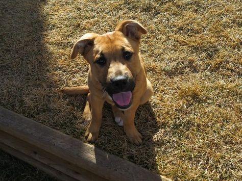 Adopt Nala On Yellow Labrador Retriever Labrador Retriever Dog Labrador Retriever