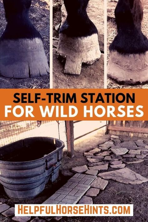 Setting up a self-trim station for wild horses, or those who are not halter trained can be a great way to help long hooves naturally wear down. Horse Care Tips, Horse Treats, Horse Training Tips, Equestrian Outfits, Equestrian Style, Equestrian Fashion, Horse Riding, Horse Horse, Horse Gear