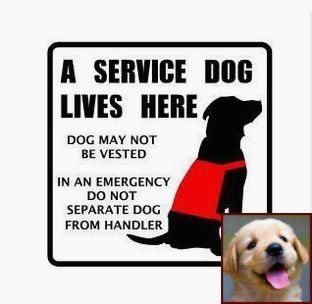 House Training A Puppy Video And Dog Training Courses Tafe Dog