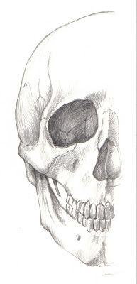 Dibujo anatómico de cráneo