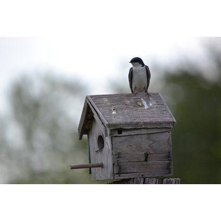 Home Bird Houses Bird House Framed Art