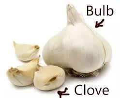 Garlic Clove Google Search Garlic Garlic Cloves Clove