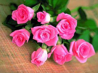 خلفيات ايفون ورد اصفر Iphone Wallpapers Download Flowers Pink Flowers Pink Roses